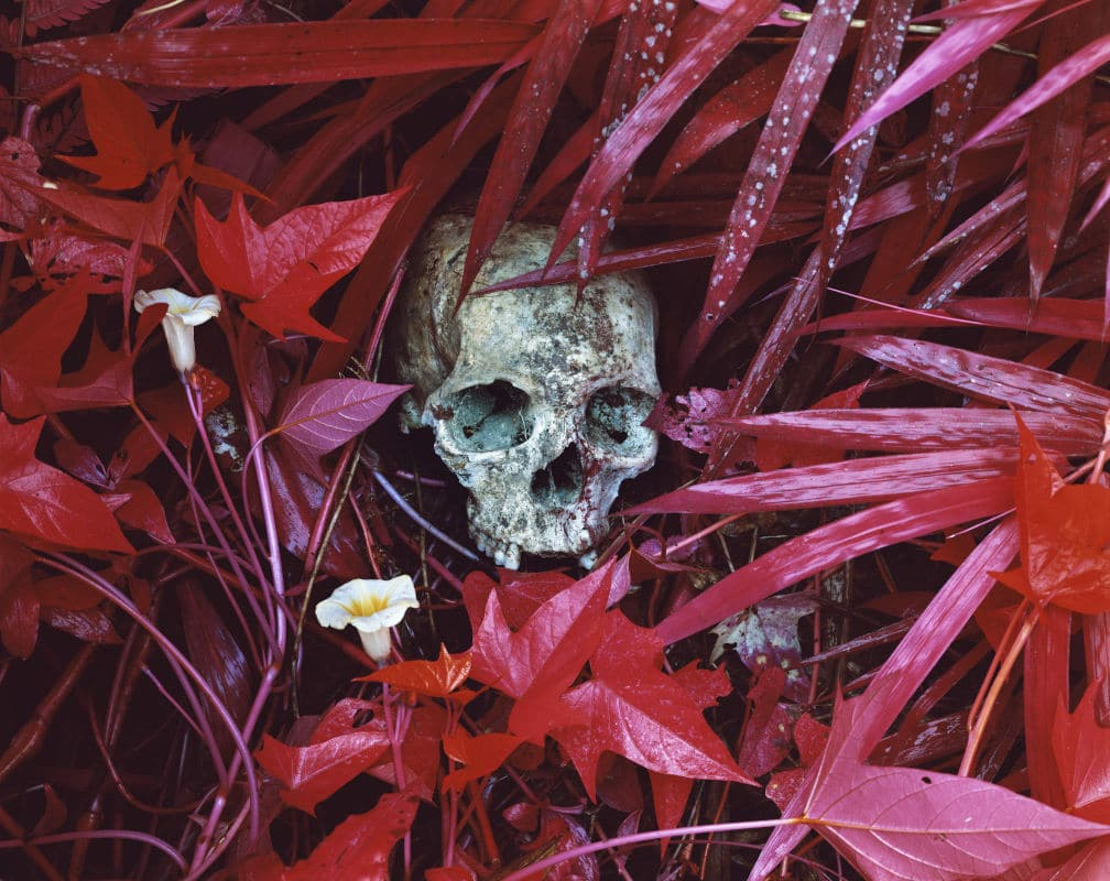 Richard Mosse-Of-Lilies-and-Remains-Congo-serie-INFRA